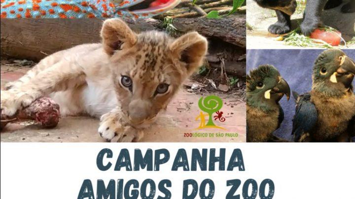 Campanha | Compre ingressos antecipados para o Zoo de SP e ajude nesse período de quarentena